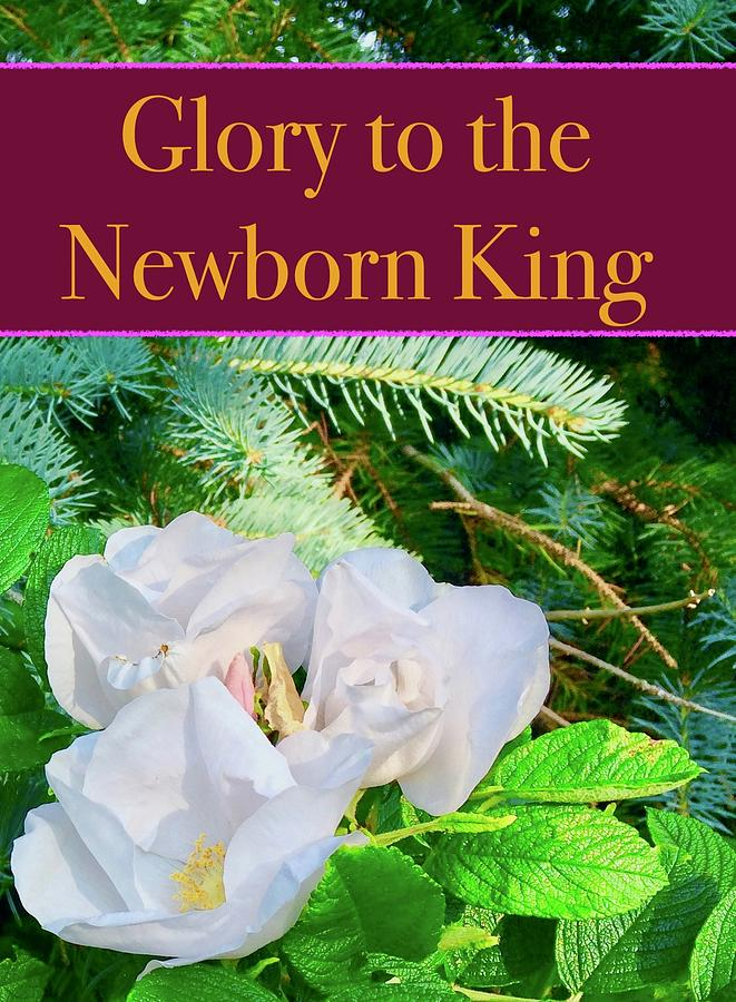 Glory Evergreens And Wild Roses by Debra Grace Addison