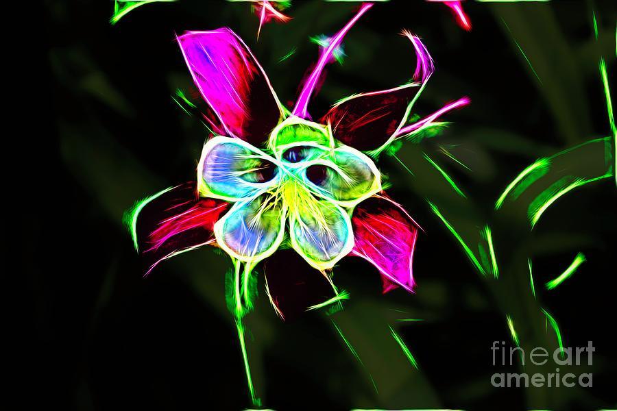 Glowing Columbine Flower by Karen Silvestri
