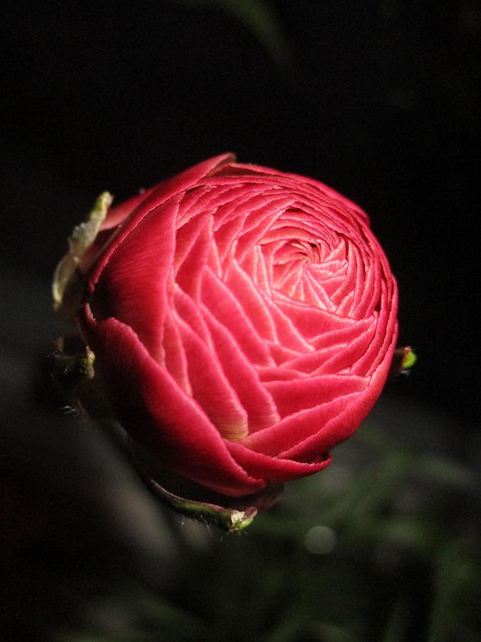 Glowing Elegance by Rosita Larsson