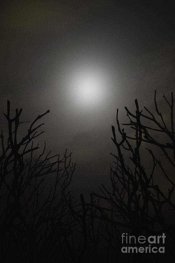 Glowing moon on foggy night by Clayton Bastiani