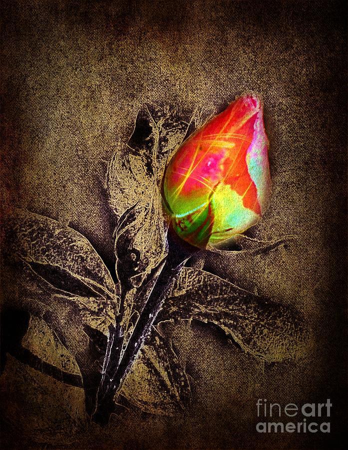 Glowing Rose by David Neace