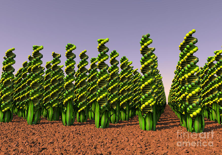 GM Crops Landscape by Russell Kightley