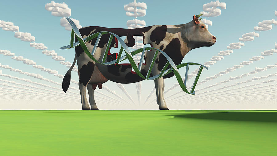 Gmo Business. Cow And Dna Strand by Bruce Rolff