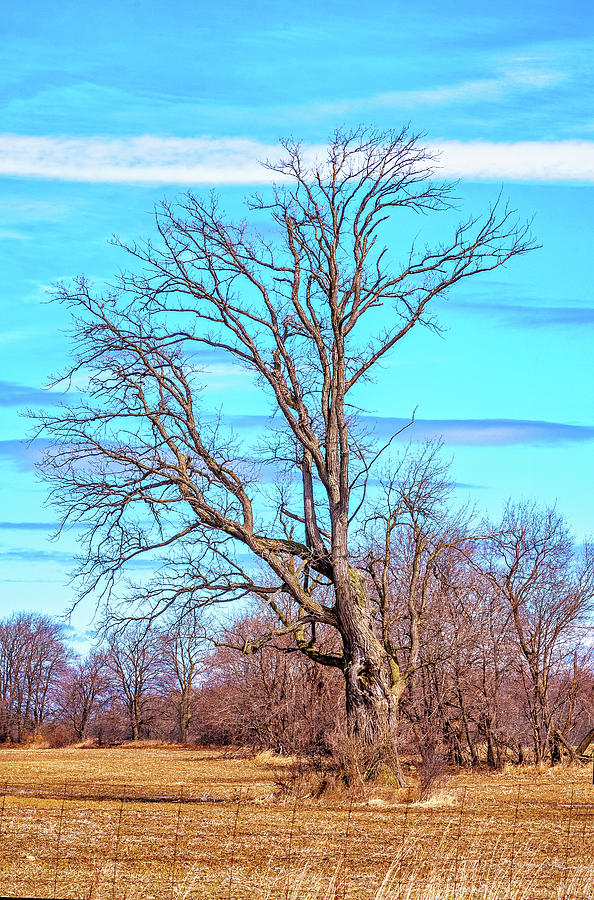 Gnarled Tree And Marbled Sky Photograph
