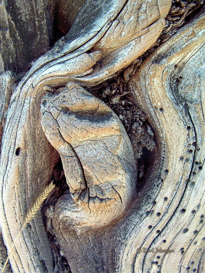 Gnarled Wood Abstract by Kae Cheatham
