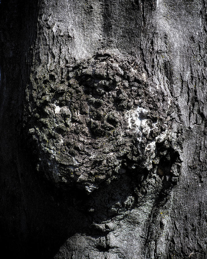 Gnarly Bark by Bill Swartwout Photography