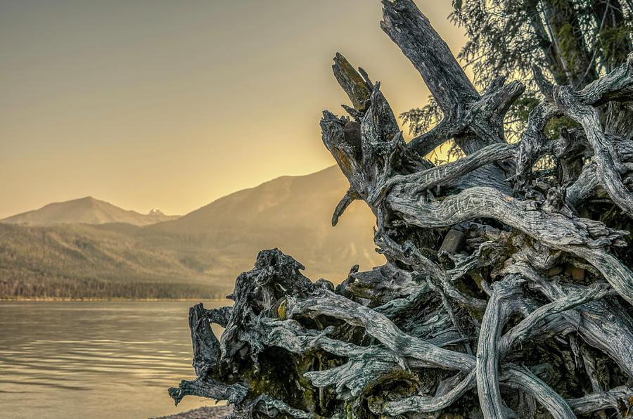 Gnarly Sunrise on Lake McDonald, Glacier National Park by Roderick Bley