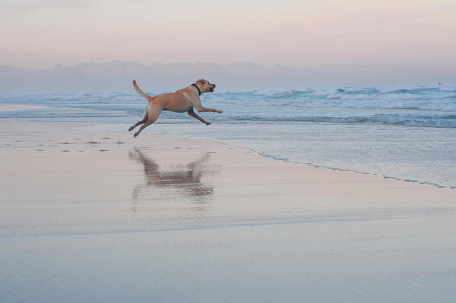 Go Fetch Photograph by Nadine Swart