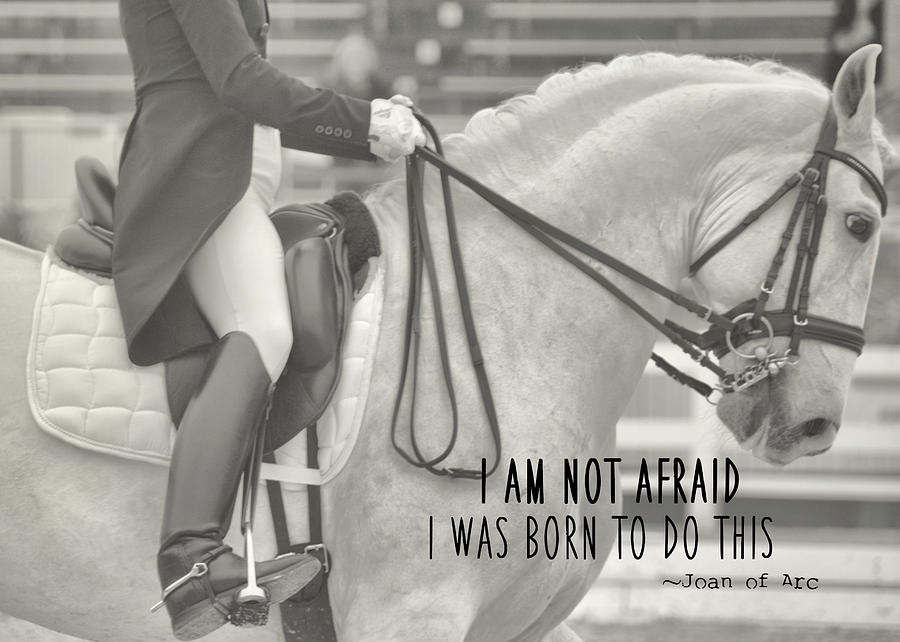 Horse Photograph - Go For Baroque Quote by JAMART Photography