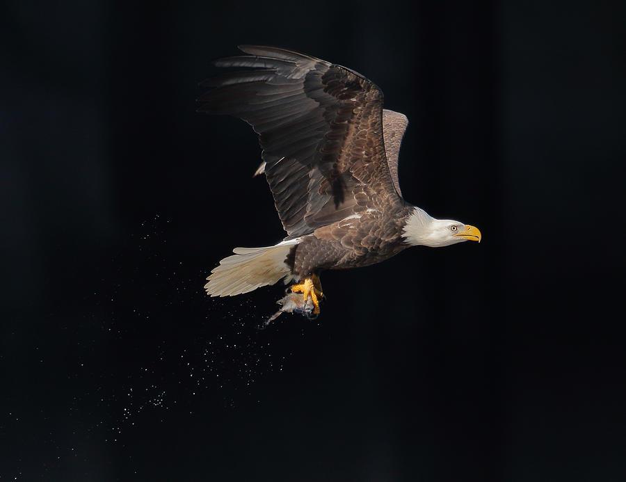 Eagle Photograph - Go Home by Anping Liu