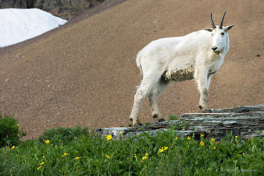 Goat Haunt Logans Pass by T-S Fine Art Landscape Photography