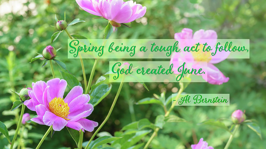 God Created June by Marianne Campolongo