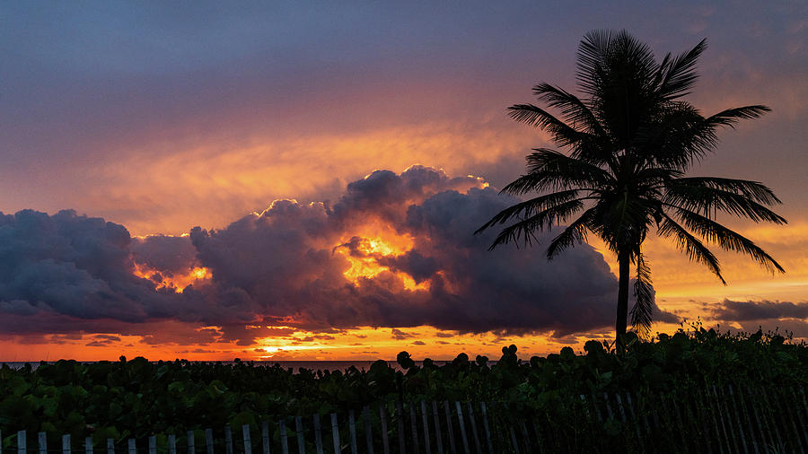 Goden Sunrise Palm Delray Beach Florida by Lawrence S Richardson Jr