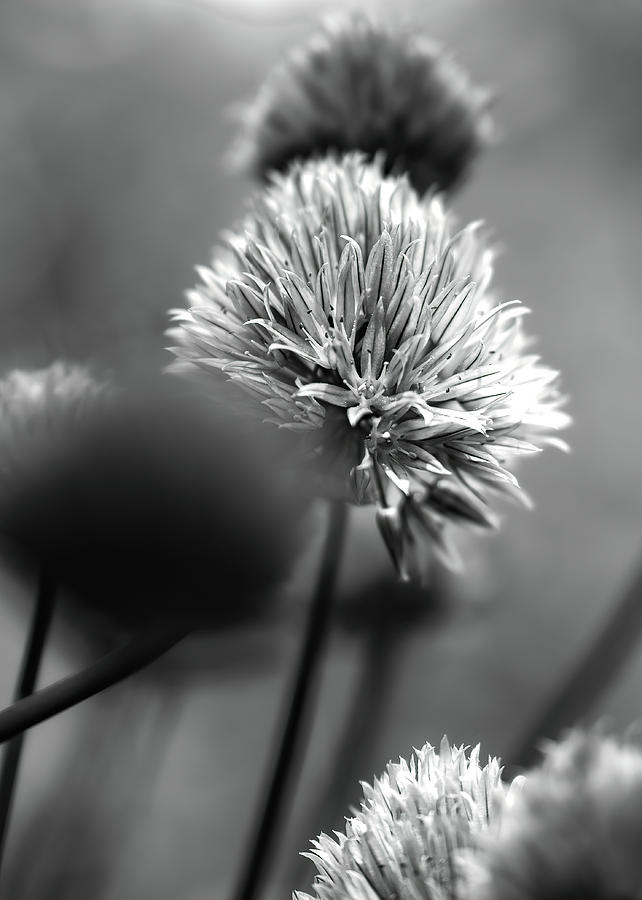 Going To Seed by Bob Orsillo