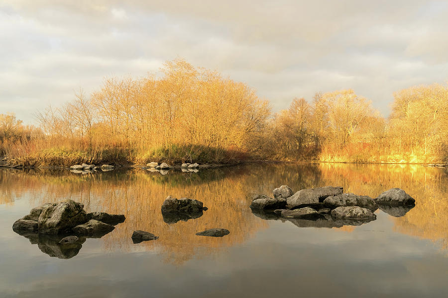 Gold and Silver - Late Fall Reflections at the Pond Take Two by Georgia Mizuleva