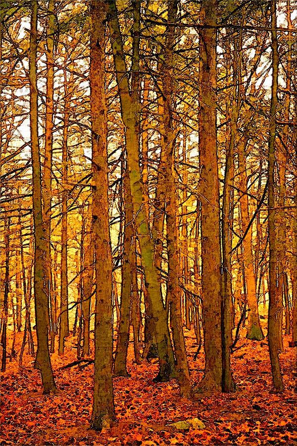 Gold Forest by Robert Bissett