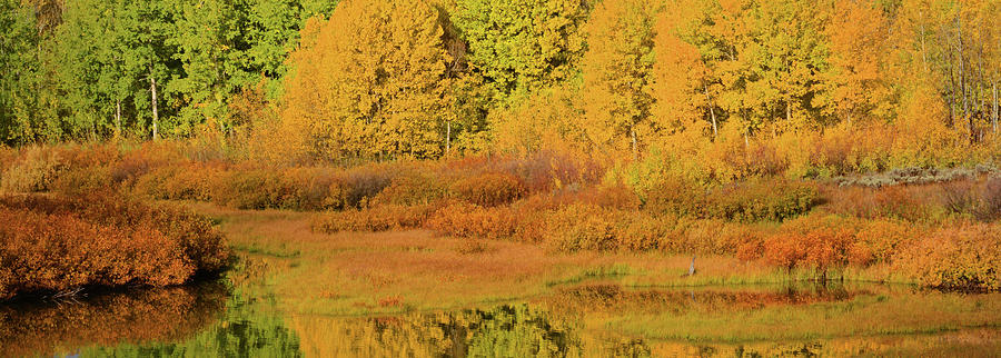 Golden at the Oxbow by Whispering Peaks Photography
