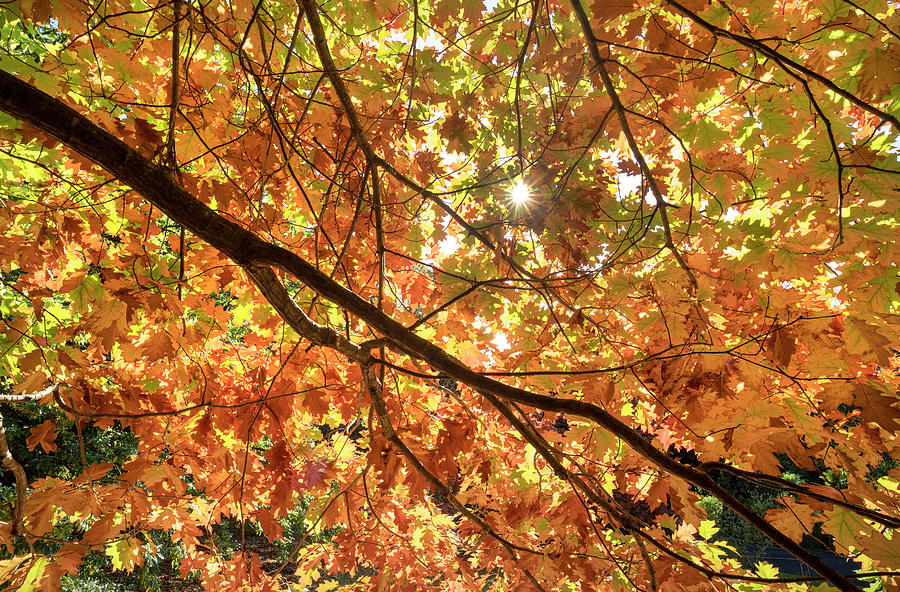 Golden Canopy. by Sean Davey