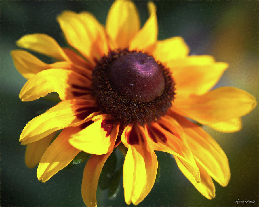 Golden Coneflower by Anna Louise