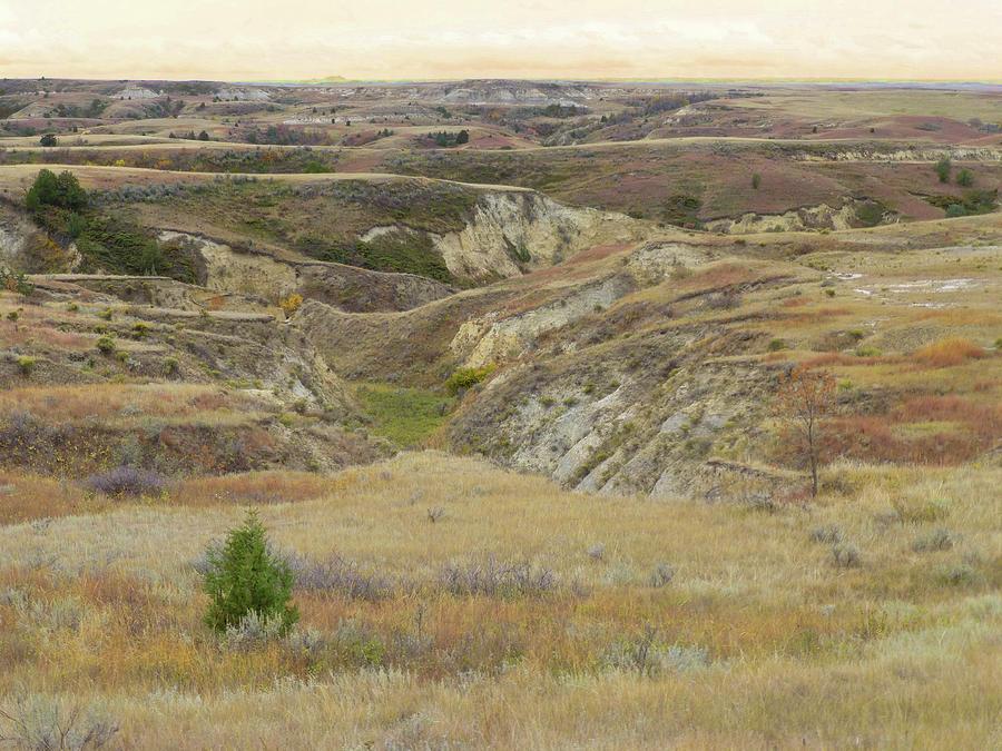North Dakota Photograph - Golden Dakota Prairie Reverie by Cris Fulton