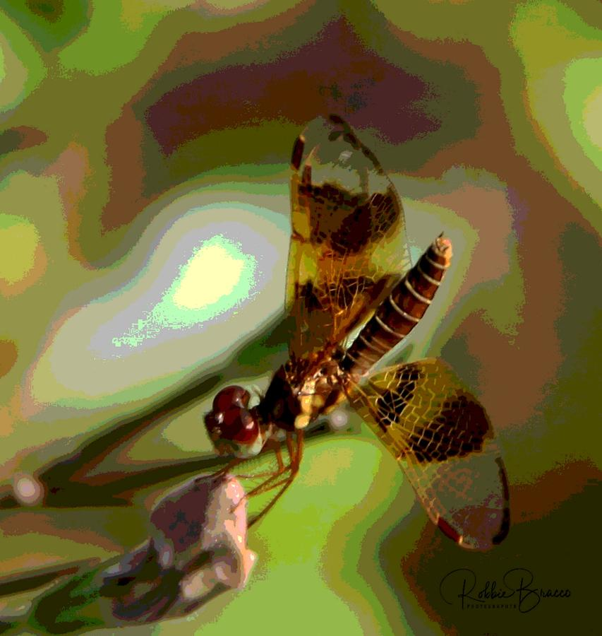 Golden Dragon Fly Collecting Nectar from a Flower Bud by Philip Bracco