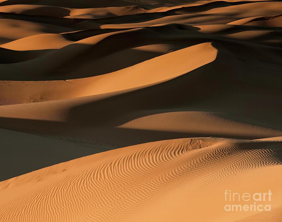 Golden Dunes Photograph