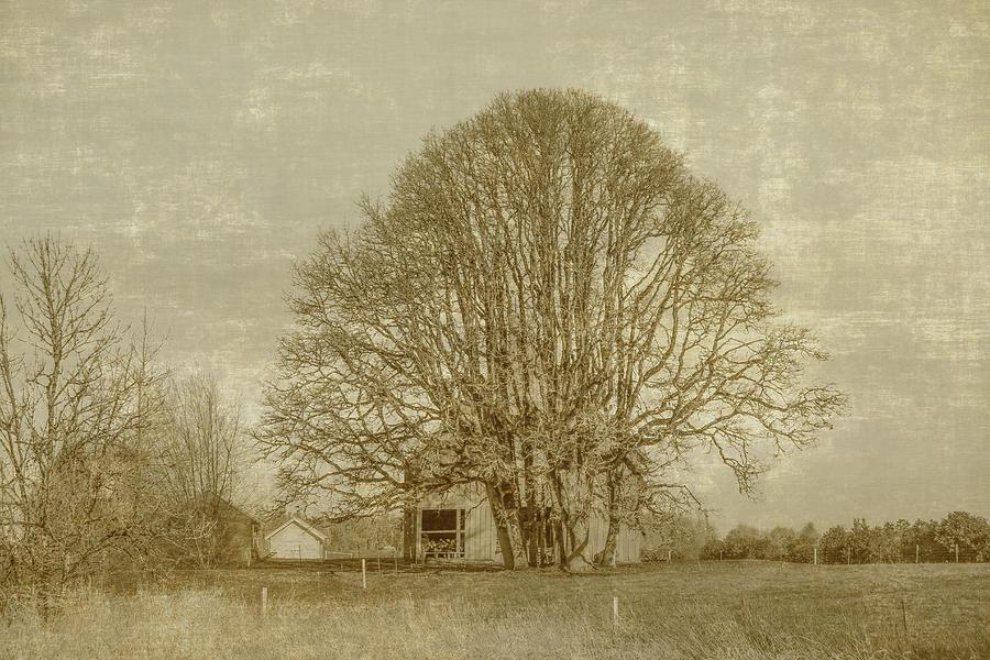 Farm Photograph - Golden Farm by Alina Avanesian