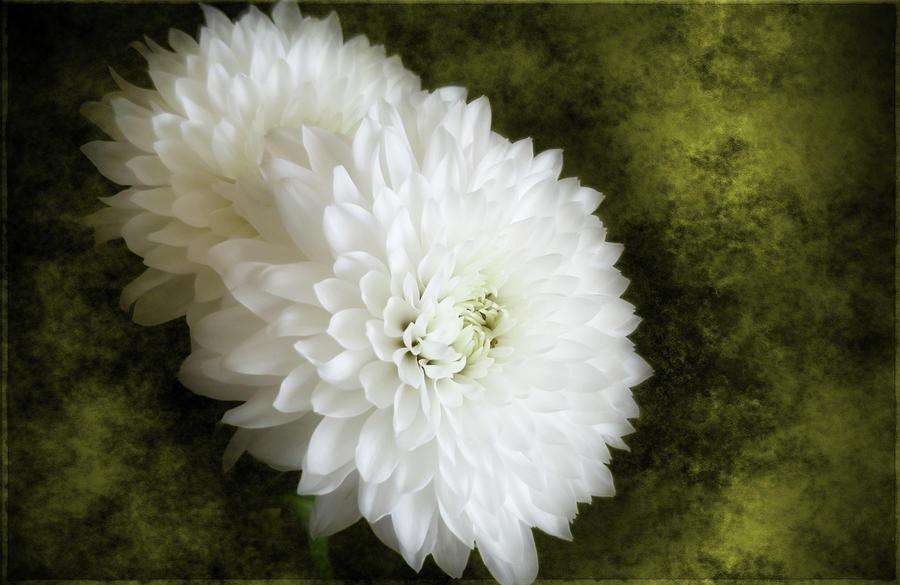 Golden Fleurs by Cyndy Doty