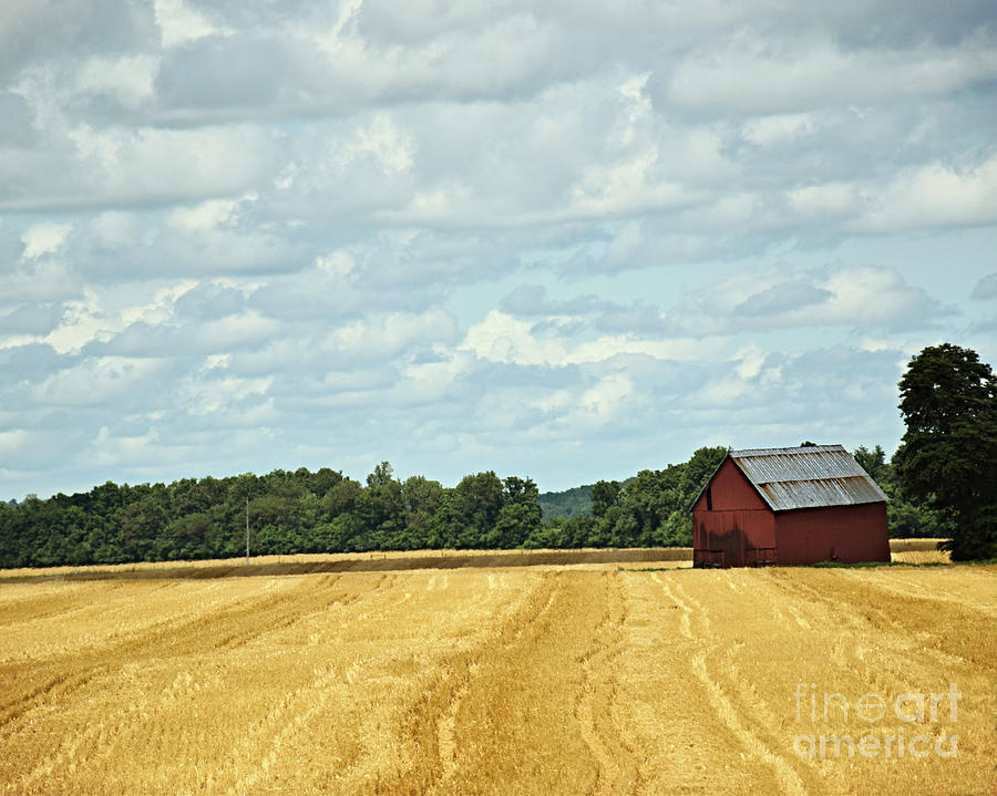 Golden Grain And Red Barn by Kathy M Krause