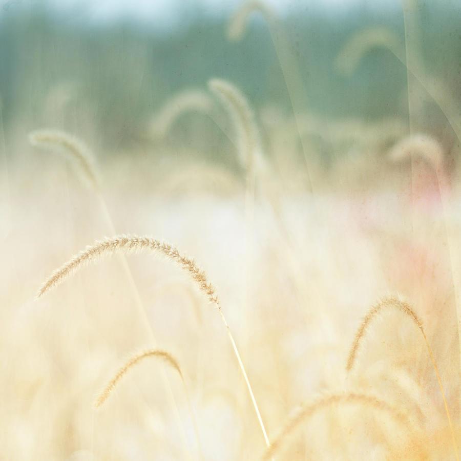 Golden Grasses Photograph by Trina Dopp Photography