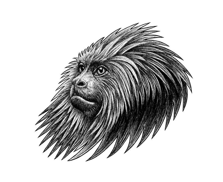 Money Drawing - Golden Headed Lion Tamarin - Ink Illustration by Loren Dowding