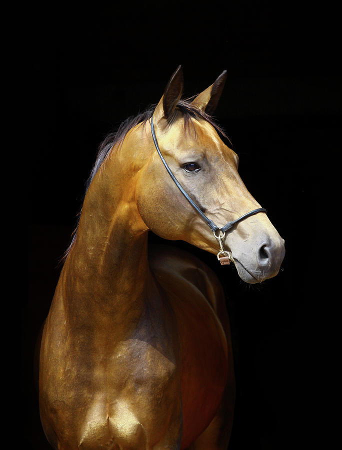 Golden Horse Photograph by Photographs By Maria Itina