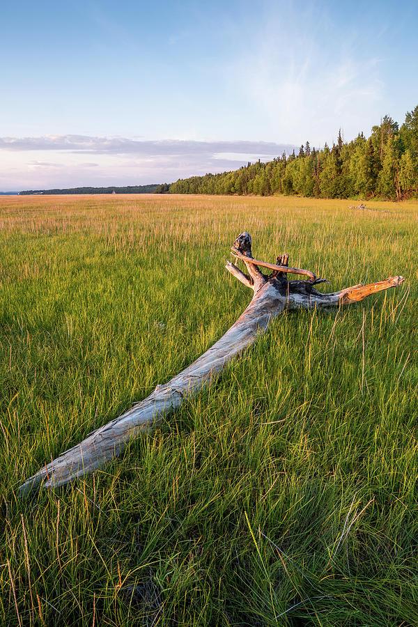 Alaska Photograph - Golden Hour Driftwood by Tim Newton