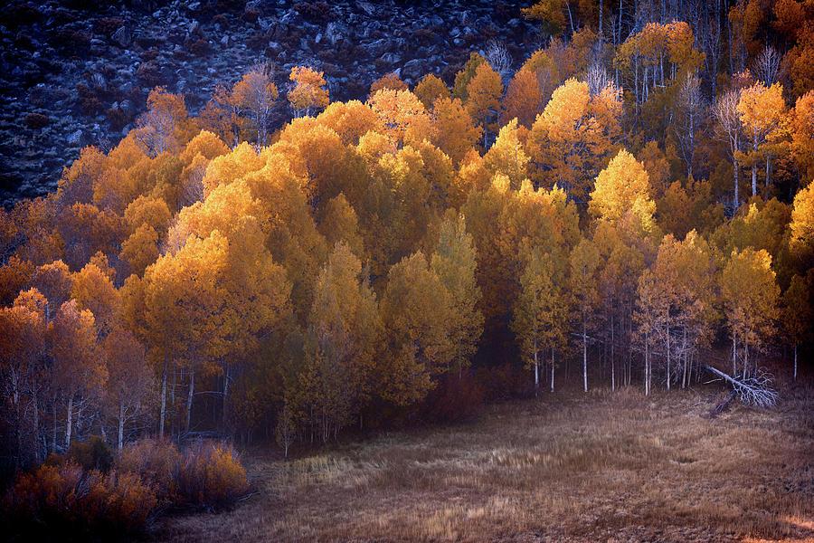 Golden Hour by Jason Roberts