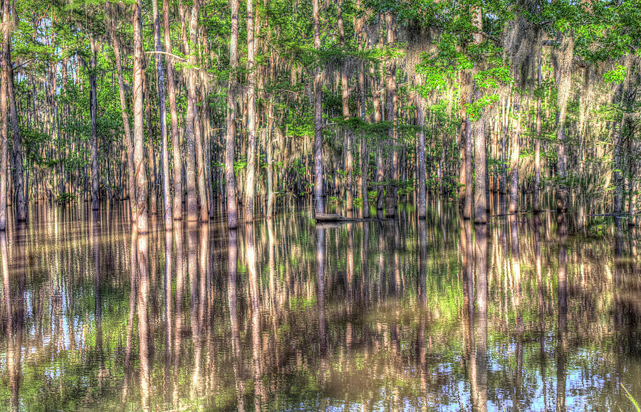Bayou Photograph - Golden Hour Serenity by Ester Rogers