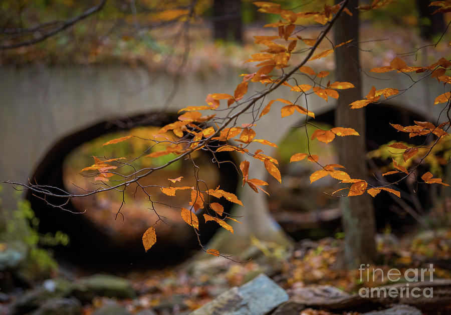 Golden leaves by Agnes Caruso