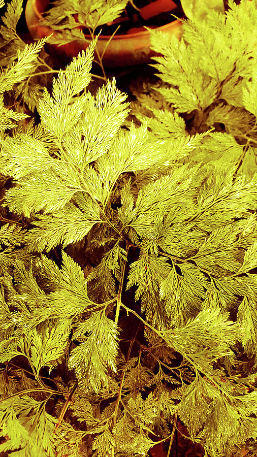 Golden Leaves Photograph