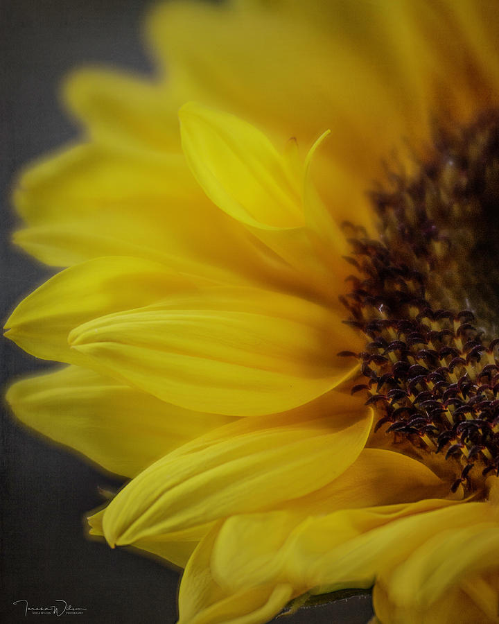 Golden Light By Tl Wilson Photography by Teresa Wilson