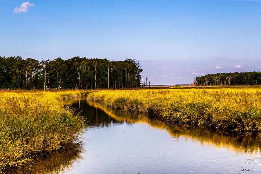 Golden Marsh by Charles Aitken