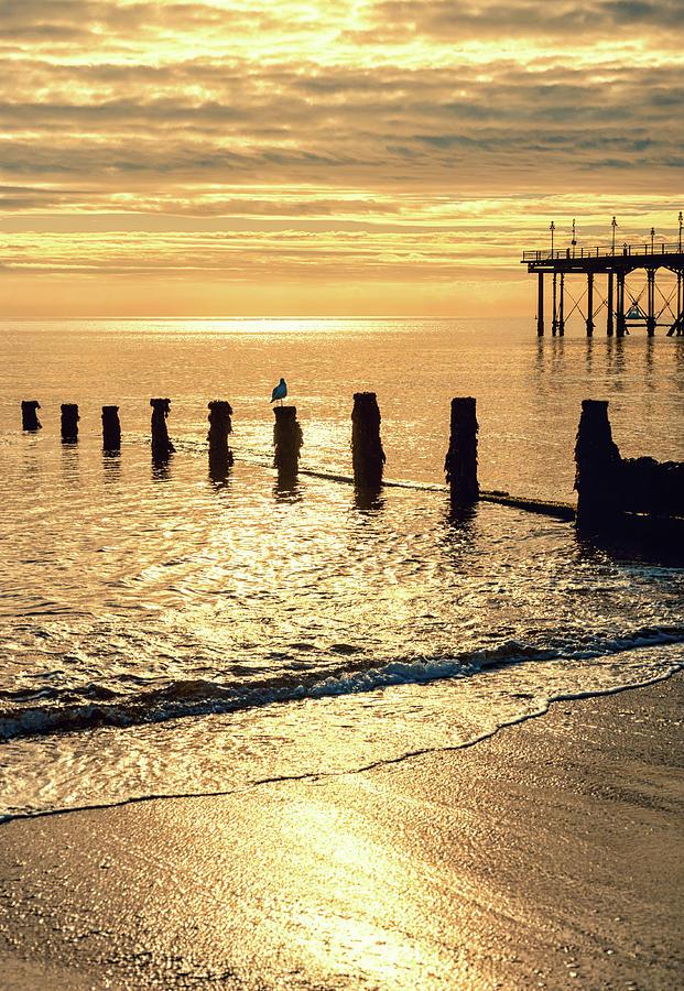 Golden Photograph - Golden Morning by A J Paul