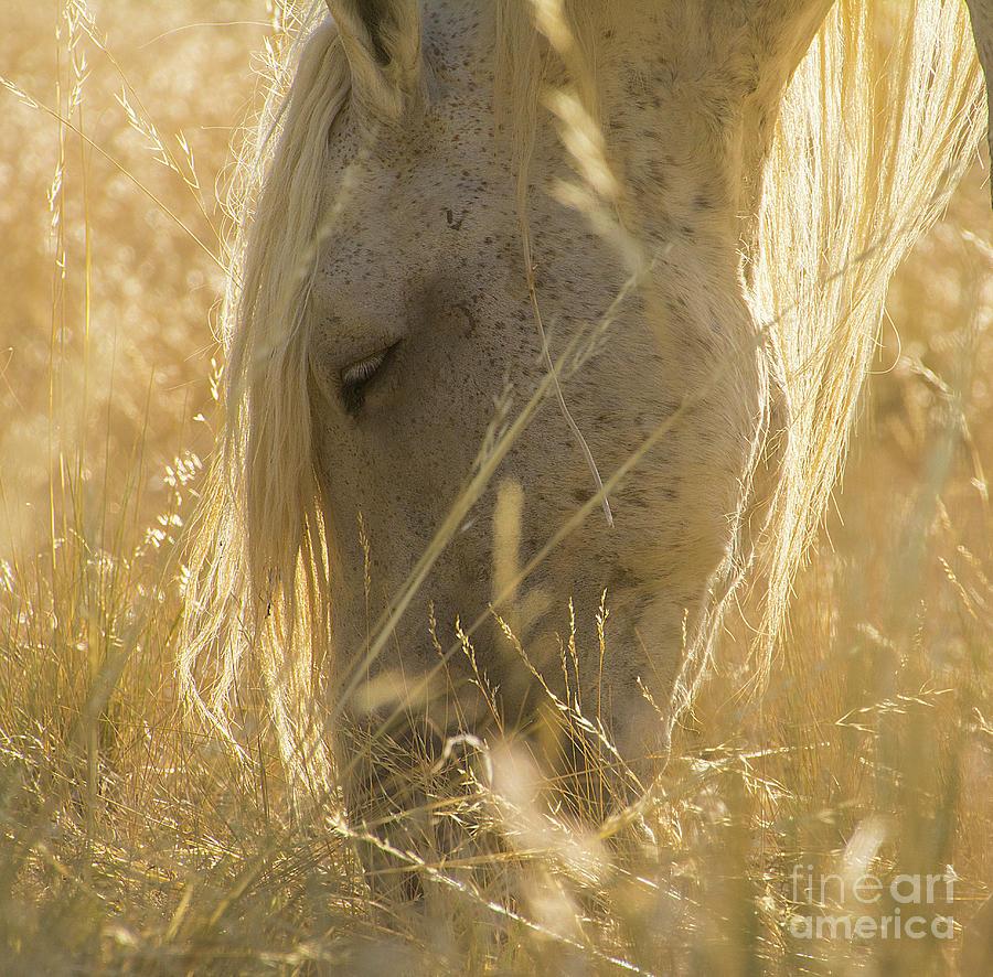 Nikon Photograph - Golden by Nicole Markmann Nelson