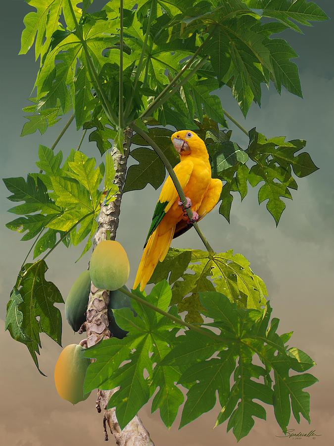 Bird Digital Art - Golden Parakeet In Papaya Tree by M Spadecaller