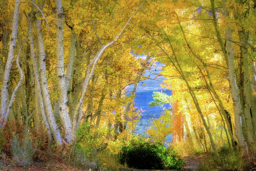 Silver Lake Photograph - Golden Pathway by Donna Kennedy