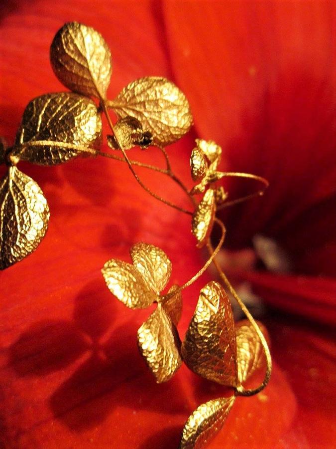 Golden Shadow by Rosita Larsson