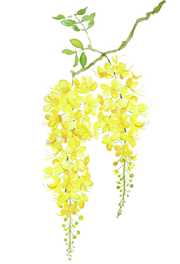 golden shower flower watercolor by Color Color