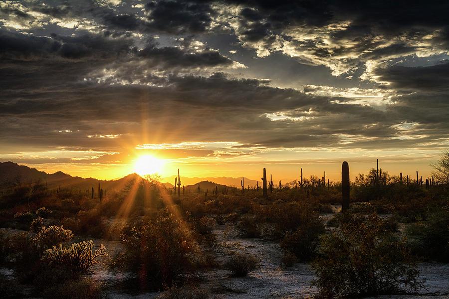 Saguaro Sunset Photograph - Golden Sonoran Sunset Skies  by Saija Lehtonen