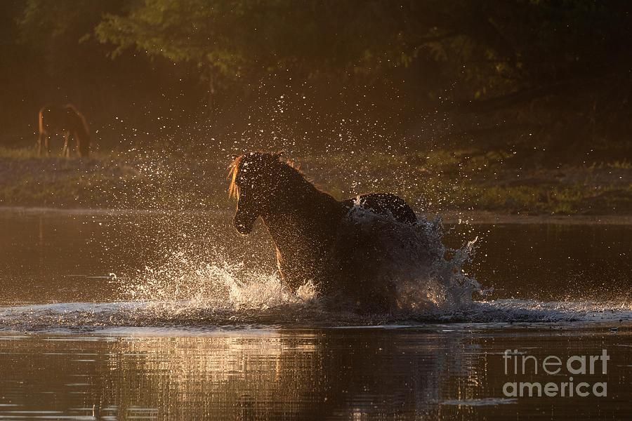 Golden Splash by Lisa Manifold