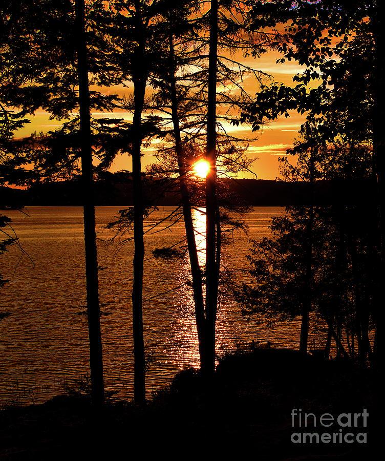Golden Sunset by Christine Dekkers