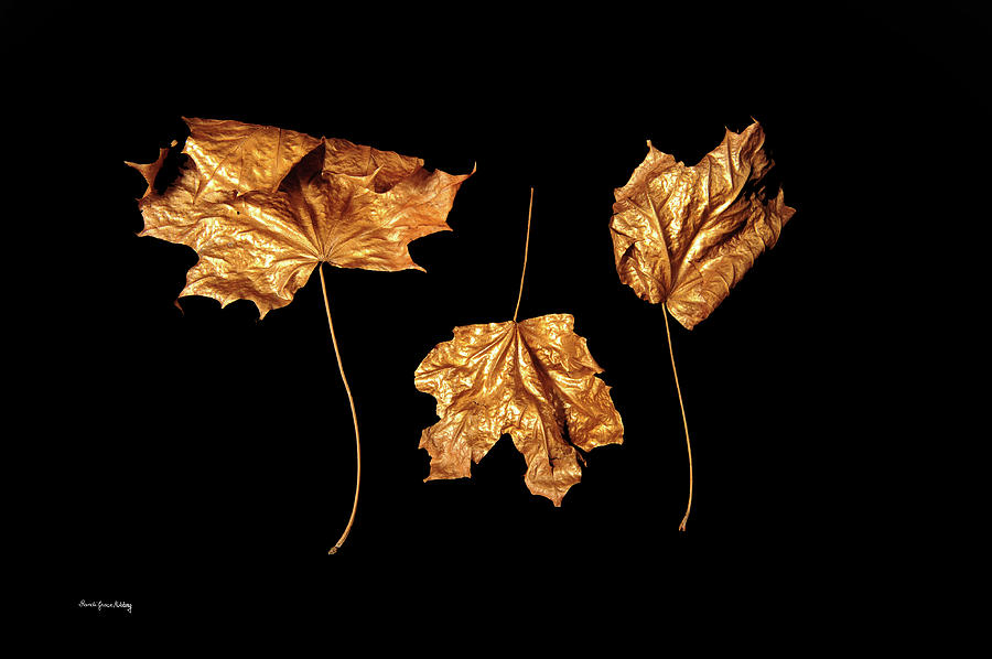 Golden Trio by Randi Grace Nilsberg