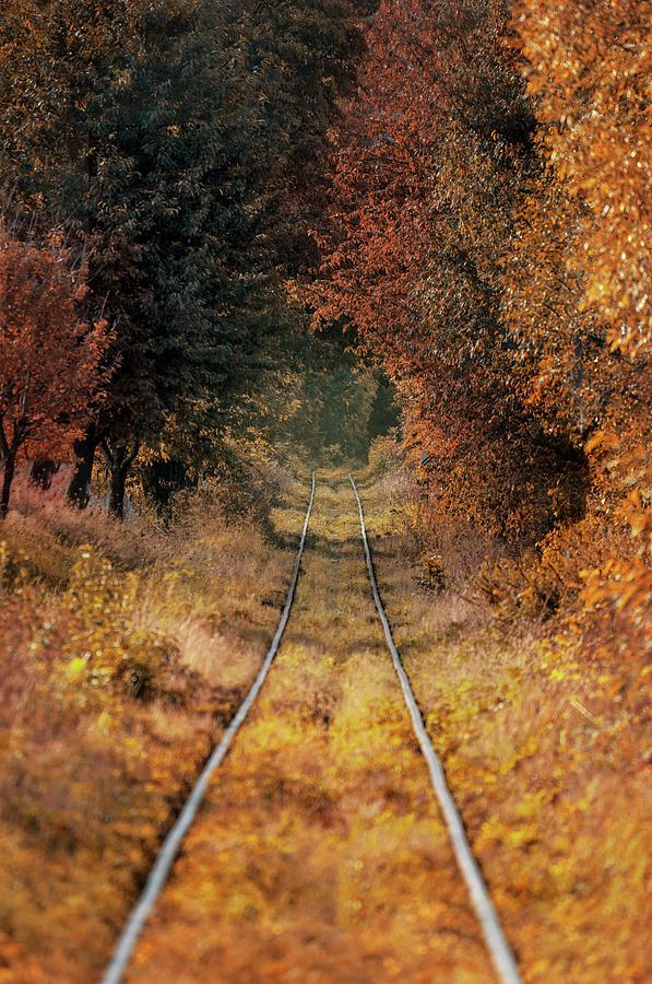Golden tunnel by Jaroslaw Blaminsky